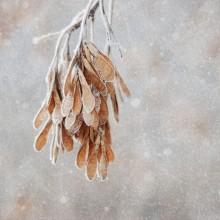 Downward - Heiner Frost