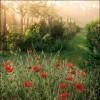 Morning Has Broken - Peter Edvinsson