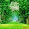 Through The Arbor - Kevin Kern